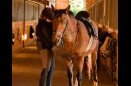 $379 for Summer Equestrian Camp at Camp Koda for Ages 4 and up in Leesburg (24% Off - $499 Value)