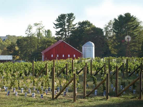 Sugarloaf Mountain Vineyard in Dickerson, Maryland Family Friendly